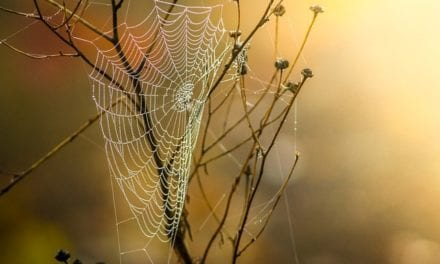 Last September's Cobwebs by Scott J. Couturier