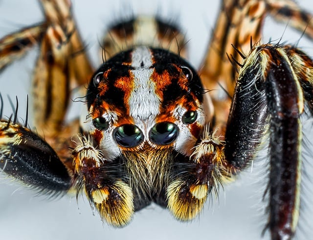 Arachnophobia by CL Bledsoe